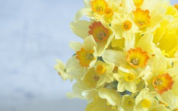 цветы, фон, букет, нарциссы