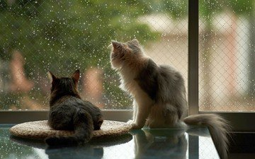 drops, house, rain, cats, window, glass