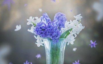 цветы, весна, белые, синие, стакан, гиацинты