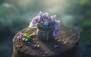 flowers, bouquet, stump, violet, pot