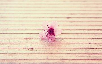 цветок, розовый, поверхность