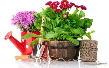 цветы, белый фон, нитки, лейка, садоводство