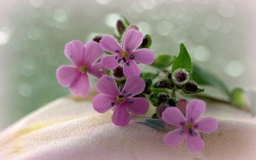 цветы, макро, ткань, букетик, боке