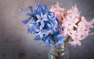 цветы, фон, лепестки, серый, букет, розовые, голубые, синие, букетик, банка, натюрморт, гиацинт, гиацинты, композиция, веточки