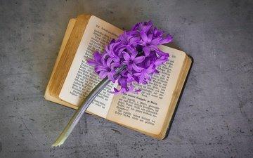 цветы, фон, ретро, серый, веточка, текст, книга, фиолетовые, сиреневые, гиацинты, композиция