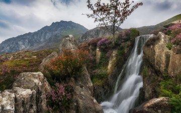 цветы, горы, скалы, дерево, водопад, поток, уэльс, сноудония