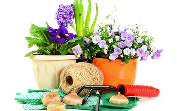 цветы, горшки, натюрморт, шпагат, колокольчик, гиацинт, фиалка, луковицы