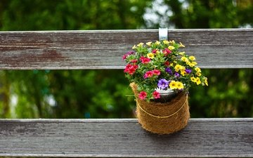 flowers, nature, the fence, pot