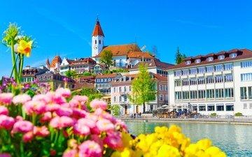 цветы, река, швейцария, дома, набережная, здания, река аре, тун