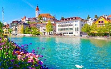 цветы, река, швейцария, дома, набережная, здания, лебедь, река аре, тун