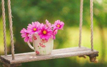 цветы, природа, фон, розовые, чашка, качели, космея