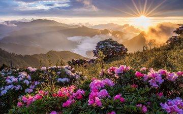 цветы, трава, облака, деревья, горы, солнце, лучи, утро, рассвет