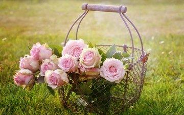 цветы, трава, природа, розы, сетка, корзина