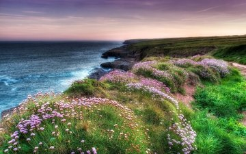 цветы, вечер, скалы, берег, море, побережье