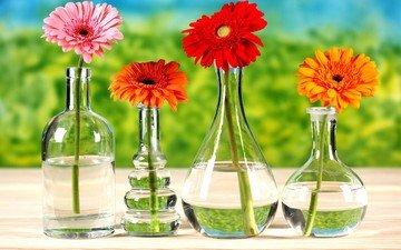 цветы, стол, бутылки, герберы, вазы