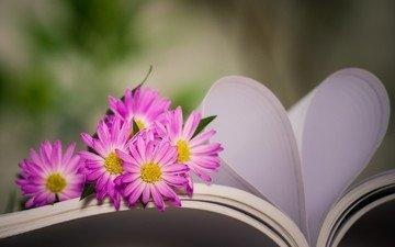 flowers, heart, book, chrysanthemum, bokeh, page