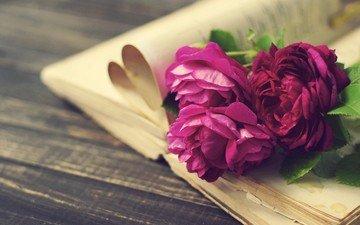 цветы, розы, доски, книга, страницы, пионы