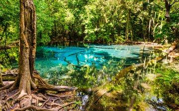 деревья, вода, природа, лес, тропики