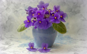 flowers, leaves, petals, pot, violet