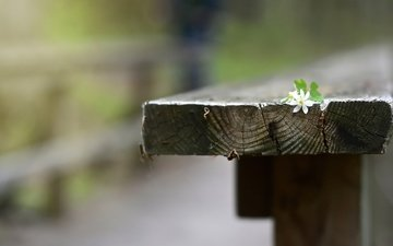 background, flower, bench