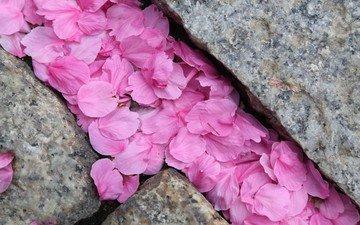 камни, макро, лепестки, розовые, сакура