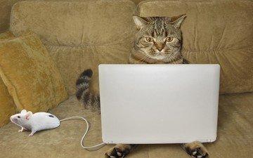 глаза, кошка, взгляд, юмор, диван, ноутбук, мышка