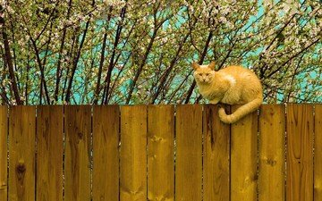 flowering, cat, the fence, spring, red