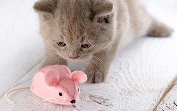 eyes, muzzle, cat, look, kitty, toy, mouse