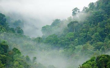 деревья, лес, туман, тропики, джунгли