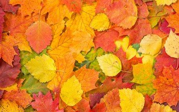 leaves, foliage, colorful, autumn, fallen