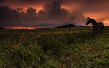 небо, лошадь, трава, облака, закат, конь