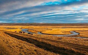 небо, трава, облака, река, лошади, кони, пастбище, степь, пасутся