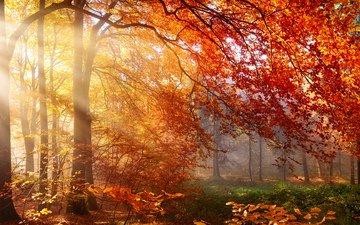 деревья, природа, лес, листья, лучи, осень, солнечные лучи