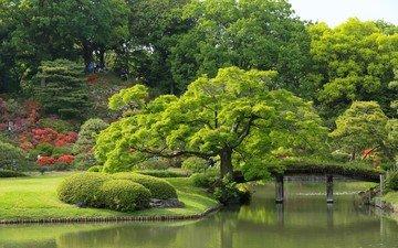 цветы, деревья, река, парк, кусты, мост, пруд