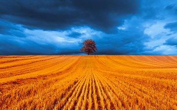 небо, облака, природа, дерево, поле