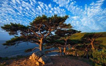небо, облака, деревья, пейзаж, море, побережье, сосны, приморский край, виталий берков