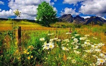 небо, цветы, трава, облака, горы, дерево, поле, забор, ромашки