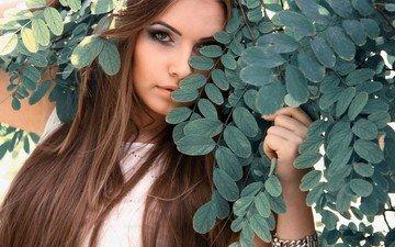 листья, девушка, портрет, ветки, взгляд, волосы, лицо