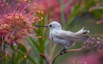 природа, цветок, птица, птичка, тропики, колибри
