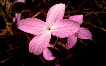 природа, макро, цветок