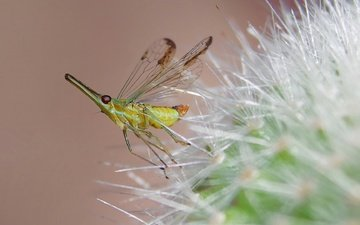 природа, насекомое, цветок, комар, былинка