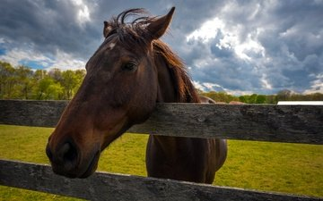 небо, лошадь, трава, облака, природа, забор, конь