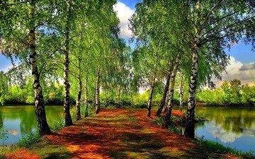 река, пейзаж, парк, березы, лето, пруд, аллея
