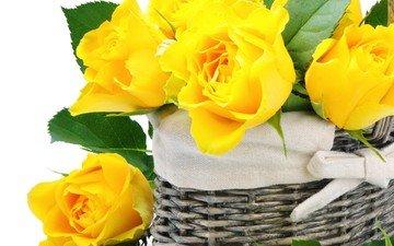 цветы, розы, букет, корзина, белый фон, желтые