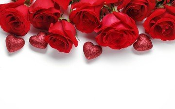 flowers, roses, red, white background, hearts, valentine's day, valentines