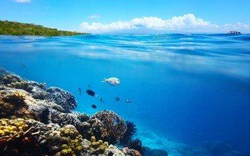 море, лето, рыбы, под водой, кораллы, рыба, подводный мир, коралловый риф