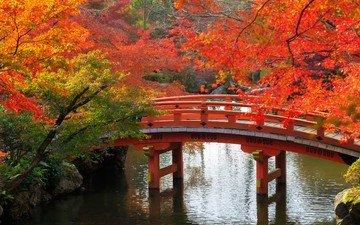 деревья, ветки, мост, осень, япония, сад, киото, пруд