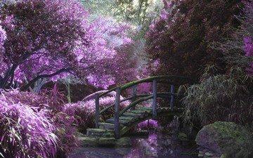 деревья, вода, природа, цветение, мостик, парк, мост, водоем, сад, пруд, деревянный мост