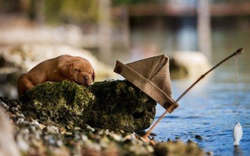 вода, сон, собака, щенок, камень, юмор, пес, рыбалка, удочка