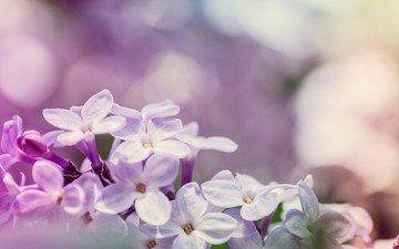 flowers, flowering, macro, spring, lilac, bokeh